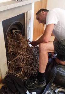 Remove a birds nest from chimney
