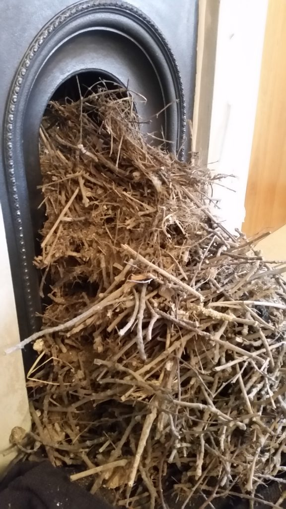 Birds nest removed from chimney fills fireplace and seven bin bags